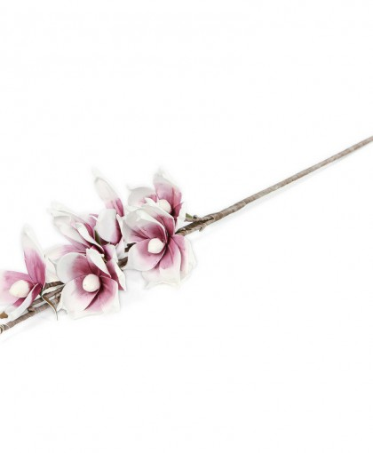 Kwiat fioletowo-biały